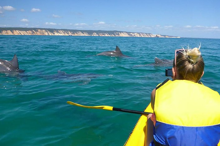 Wild dolphins playing around the kayaks