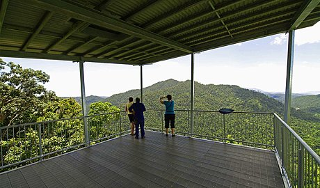explore from the top to the bottom of the rainforest canopy