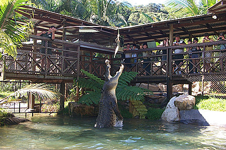 Rainforeststation - Croc Show !