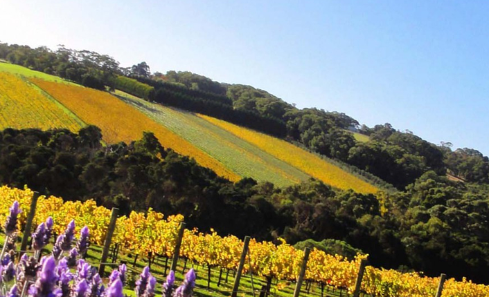 Yarra Valley Food and Wine Day Tour • Tours To Go