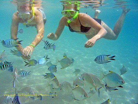 Snorkel with hundreds of sub-tropical fish...