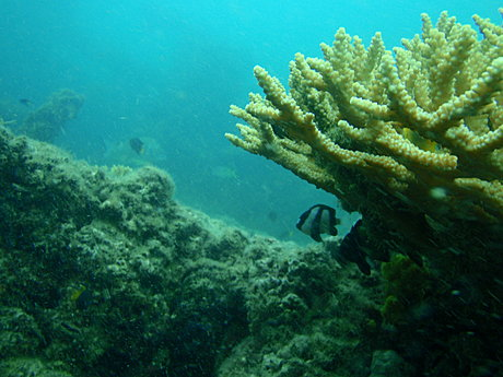 SCUBA Dive with Adventure Moreton Island