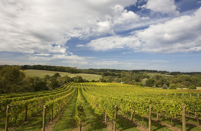 Mornington Peninsula Vineyards