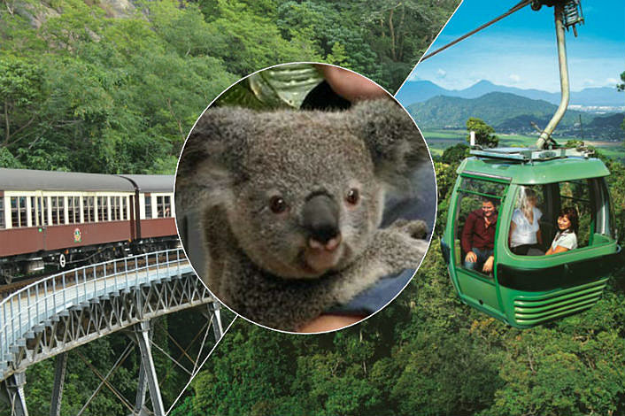 Koala, Skyrail and Kuranda Train