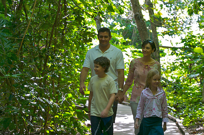 Discover with a self guided island walk through the rainforest