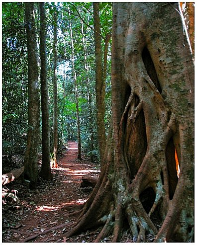 Rainforest Walk option