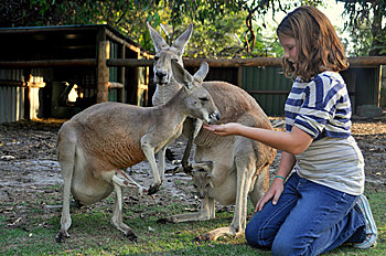 Furry and Friendly Kangaroos