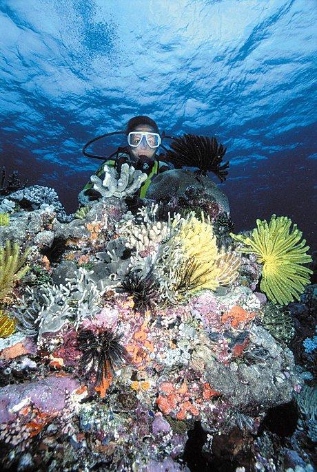 reefs day debacle - photo #30