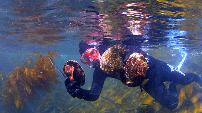 Snorkelling for Abalone