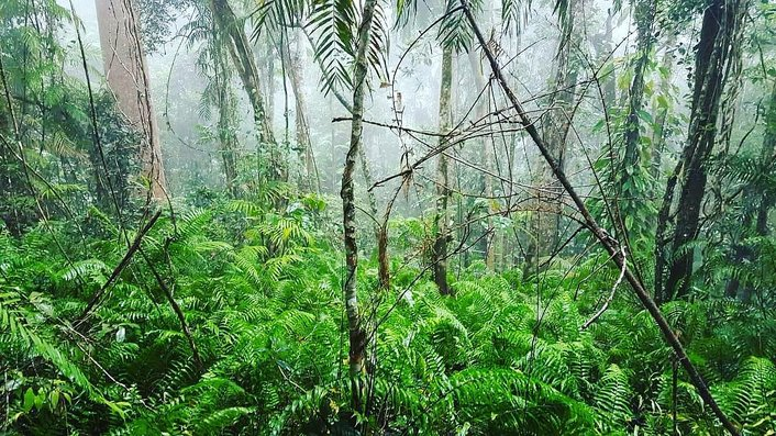 The lush Daintree Forest