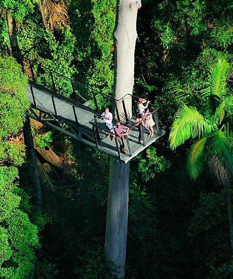Skywalk Rainforest Walk (option)