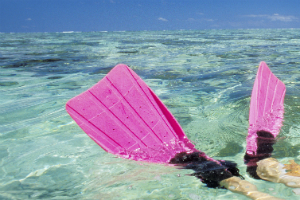 pink Flippers on the Great Barrier reef