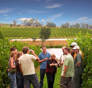 Sampling wines in a vineyard