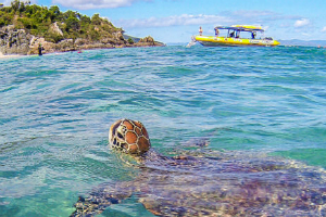 Turtle Spying on Boat in Whitsundays