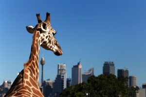 Image result for sydney taronga zoo