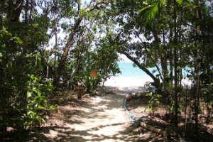 Track to Capre Tribulation Beach
