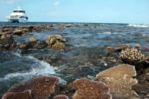 Great Barrier Reef at low tide Hastings reef