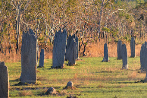magnetic termite mounds as the sun sets