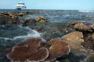 exposed reef and dive boat