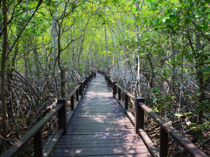 Mangrove Boardwalk Darwin