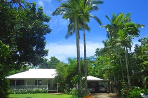 Palm trees over the roof of South Pacific BnB Clifton Beach