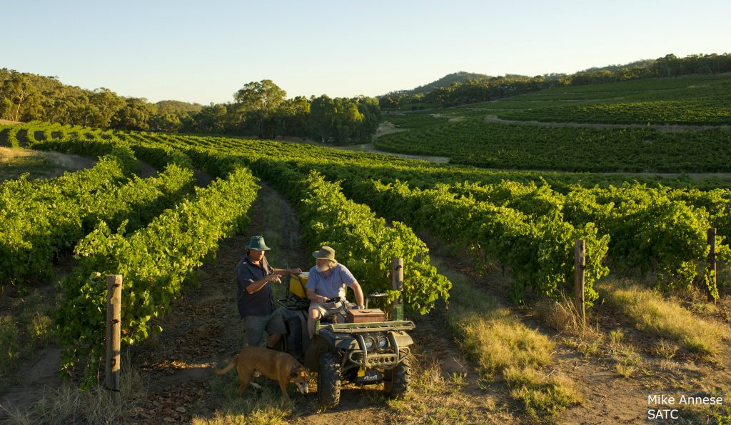 Vineyards with tractor Clare Valley