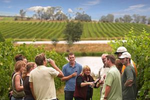 A group tasting wine among the grape vines
