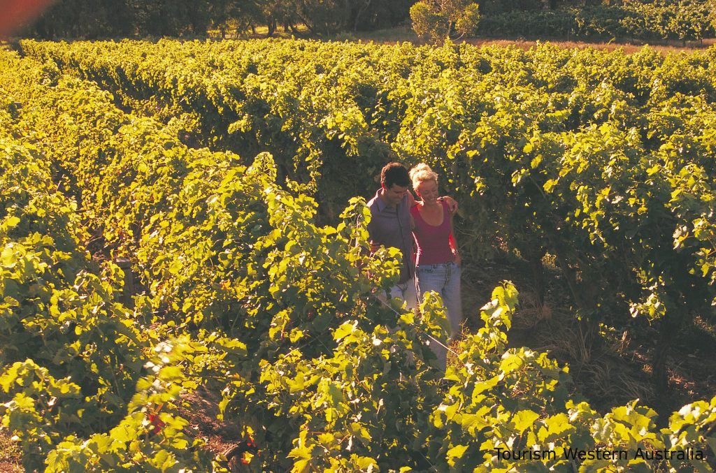 2 people walking through the vineyards