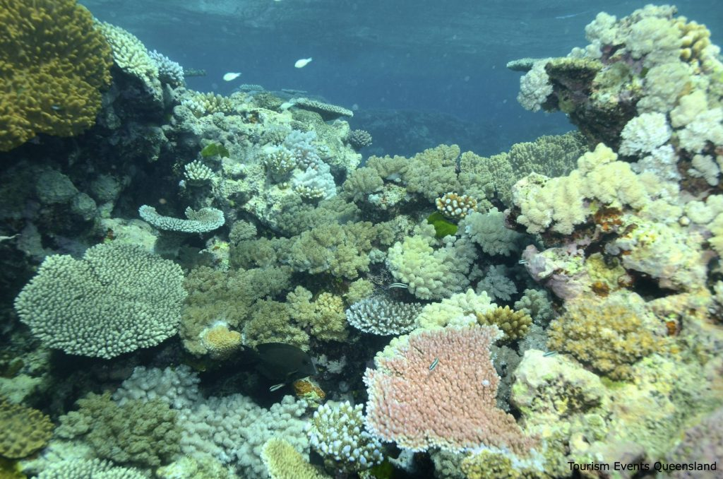 Underwater view of coral with a large pink coral in the foreground