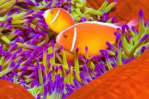 Orange fish swimming in coral