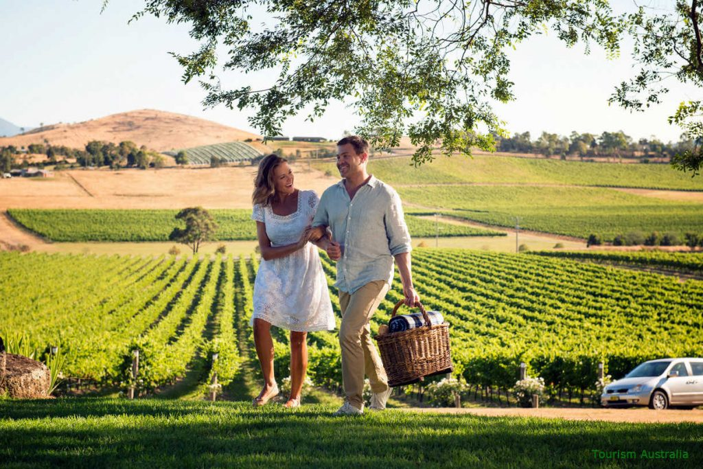 Couple walking in vineyards with a picnic basket