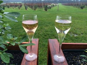 Two glasses of bubbles in the vineyard