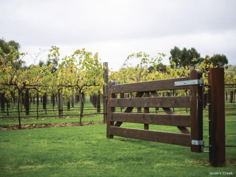 an Open farm gate leading to a Vineyard