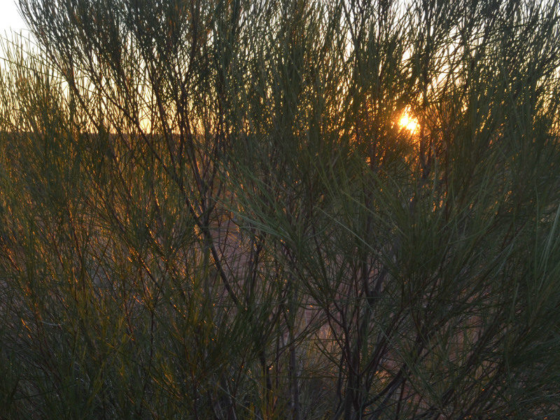 central Australian sunrise through the scrub