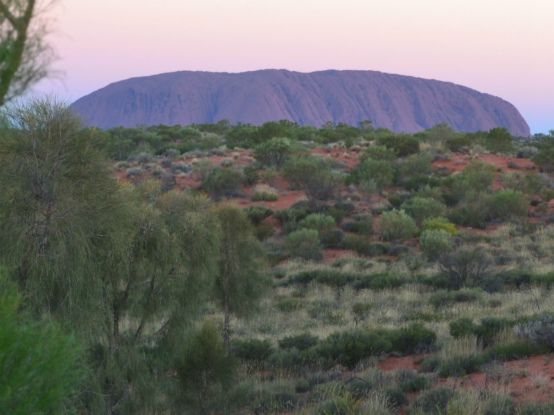 Early morning colours of Uluru