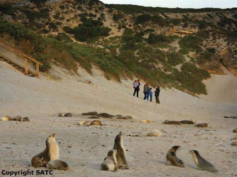 Seals and People at Seal Bay Kangaroo Island