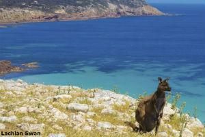 Kangaroo at Stokes Bay Kangaroo Island