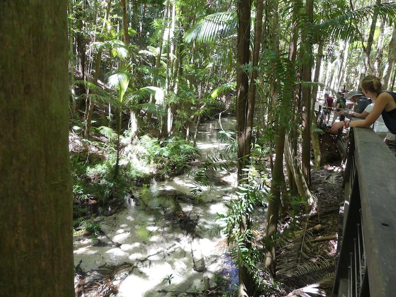 Walking along the boardwalk next to Wanggoolba Creek