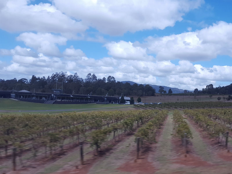 looking down a row of Hunter Valley grapevines