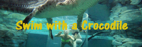 Swiming in a pool with a crocodile