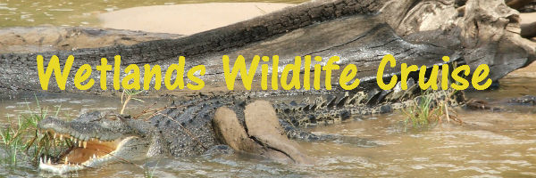 Crocodile sunbaking in the Wetlands near Darwin