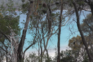 looking through the trees at Wineglass Bay